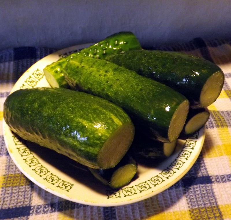 Как сажать клубнику осенью на открытый грунт